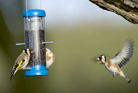 how to attract birds to your garden 10 top tips notes on nature