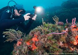 sea dragon 2500 photo video dive light top 5 pieces of underwater photo gear for the summer scuba diver life