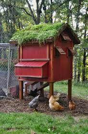 homestead ideas chicken coop projects