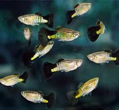 aquarium pvt ltd home