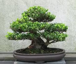 bonsai workshop shofuso japanese house and garden
