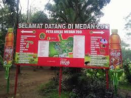 merak hijau contest indonesia challenge12 2 dunia satwa