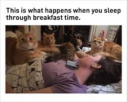 Cat Meme Ladies - 10 fresh cat memes today 1 space kitten ladies leggings funny