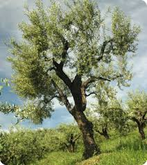 on olive branches and peace offerings garcia media