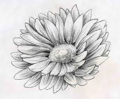 hawaiian flower coloring pages flower coloring page tropical