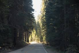 free stock photo of road through trees in thick forest