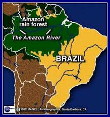 native plants in the amazon rainforest apes amazon rainforest on emaze