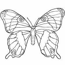 coloring pages directory memmenk butterfly images