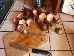 blatte de cuisine blatte de cuisine 100 images blatte germanique infestation