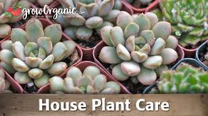 how to keep your indoor plants healthy youtube
