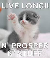 Good Luck Cat Meme - good luck cat meme luck best of the funny meme