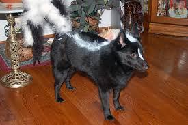 Pet Halloween Costumes The 100 Silliest Pet Halloween Costumes 1