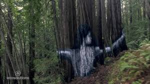 Forest Mural by Stunning Mural Appears In Secret Forest Cnn Style