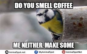 Crazy Bird Meme - bird memes