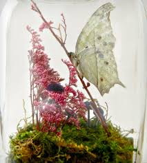 real butterfly terrarium kit version 2 inactive crafting u0026 diy
