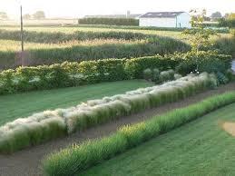 339 best grassey images on pinterest ornamental grasses