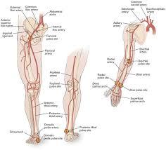 Foot Vascular Anatomy 134 Best Vascular Images On Pinterest Nursing Schools