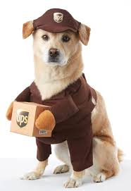 best 25 pet costumes ideas on pinterest pet halloween costumes