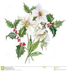 christmas flowers watercolor christmas flowers stock vector image 56695295