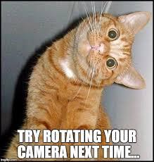 Cat Meme Maker - stupid cat meme generator imgflip