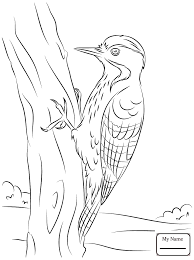 coloring pages for kids woodpeckers hairy woodpecker birds