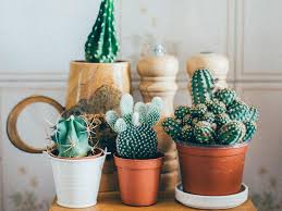 succulent house millennials are obsessed with houseplants because they can u0027t