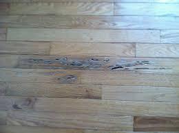 Hardwood Floor Water Damage Hardwood Floor Preservation Water Damage All Superior Flooring