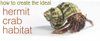 Crab Decorations For Home How To Create The Ideal Hermit Crab Habitats