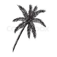 doodle coconut tree icon draw illustration design stock