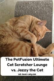 Cat Scratch Lounge The Petfusion Ultimate Cat Scratcher Lounge