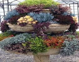 succulents garden ideas pots for succulent gardens outdoor