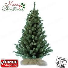 18 mini pine tree unlit table top decoration