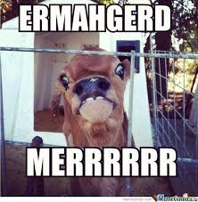 Ermahgerd Memes - ermahgerd by ignne meme center