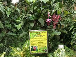 wollongong botanic gardens botanical garden plants new makiling botanic gardens under the