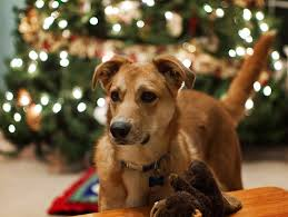 pet christmas pet safety tips for the holidays petmd