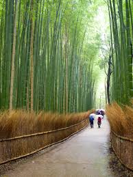 best things to do in things to do in kyoto highlights for first time visitors to