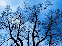 blue tree by khaosprinz on deviantart