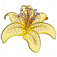 illustration of lily flower clip art royalty free cliparts
