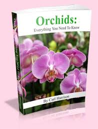 orchids care orchid care secrets revealed the orchid resource