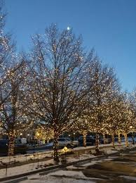 Christmas Lights Colorado Springs Christmas Lights On Trees Out Front Of Broadmoor Picture Of The