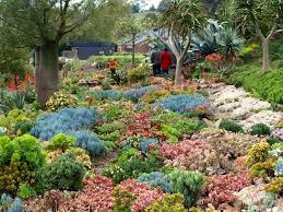 10 best succulent garden of attila and michele kapitany images on