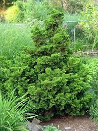 70 best sensational shrubs trees images on