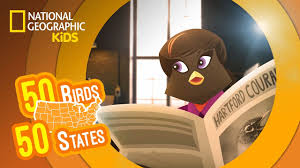 connecticut feat rockin u0027 renee the american robin 50 birds
