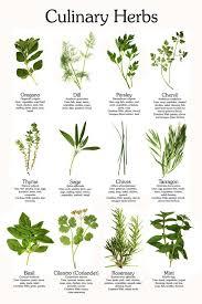 best 20 herb planters ideas on pinterest growing herbs 406 best edible gardening herbs images on pinterest herbs garden