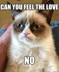 Feel The Love Meme - can you feel the love no cat meme cat planet cat planet