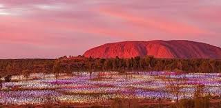 field of light uluru great news for people who havent seen uluru field of light oversixty