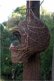 Cool Tree Houses 44 Best Tree House Images On Pinterest Treehouses Awesome Tree