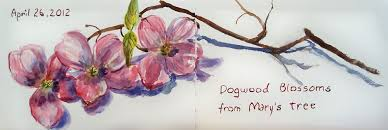 hudson valley sketches dogwood blossoms