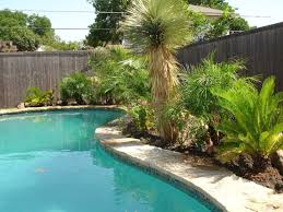 excellent swimming pool designs with palm trees in the middle of