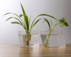 mkono 2 pcs wall mounted glass vase wall hanging planter plant
